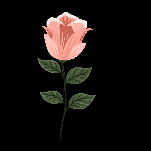 Květiny MyProm